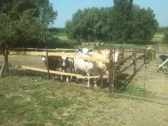 b_240_180_16777215_00_images_2015-16-tanev-cikk_107-hernadcece-goncruszka-02.jpg
